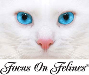 Focus On Felines Professional Cat Shampoo, Ear Cleaner Facials and Colognes